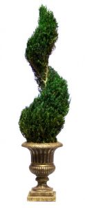 Preserved Classic Spiral Topiary 30 inch in Juniper Foliage